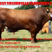 Roed Fabel Red Angus bull